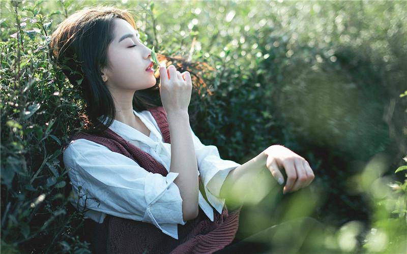 韩晨阳言舒雅小说《落花微语诉我心》全文免费在线阅读txt无弹窗